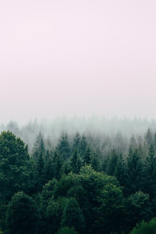 Die Schwächung der Wälder fliegt gerade auf