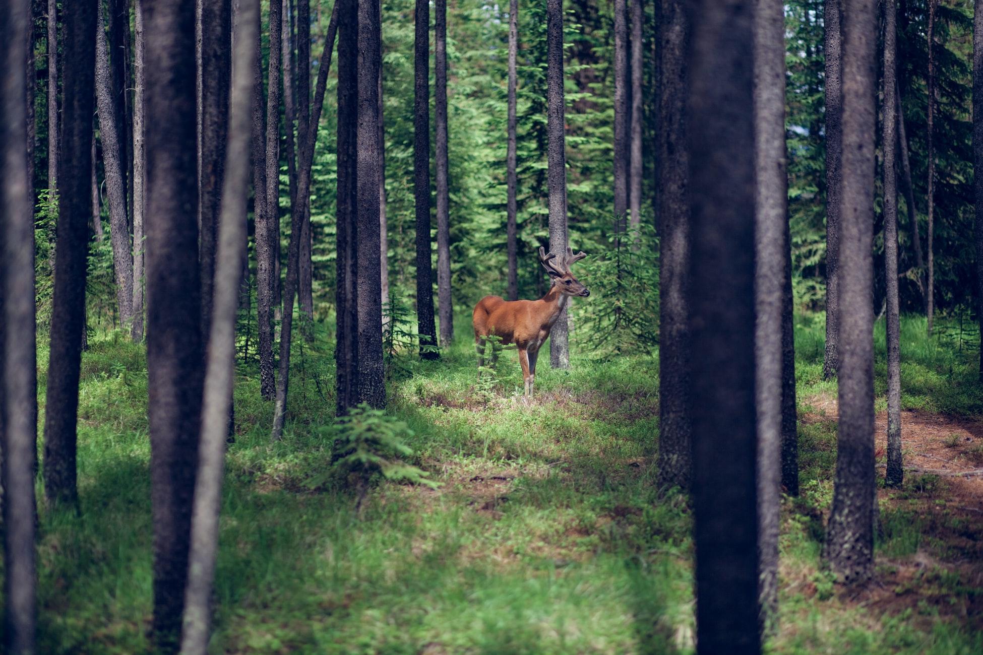 Es knallt im Wald